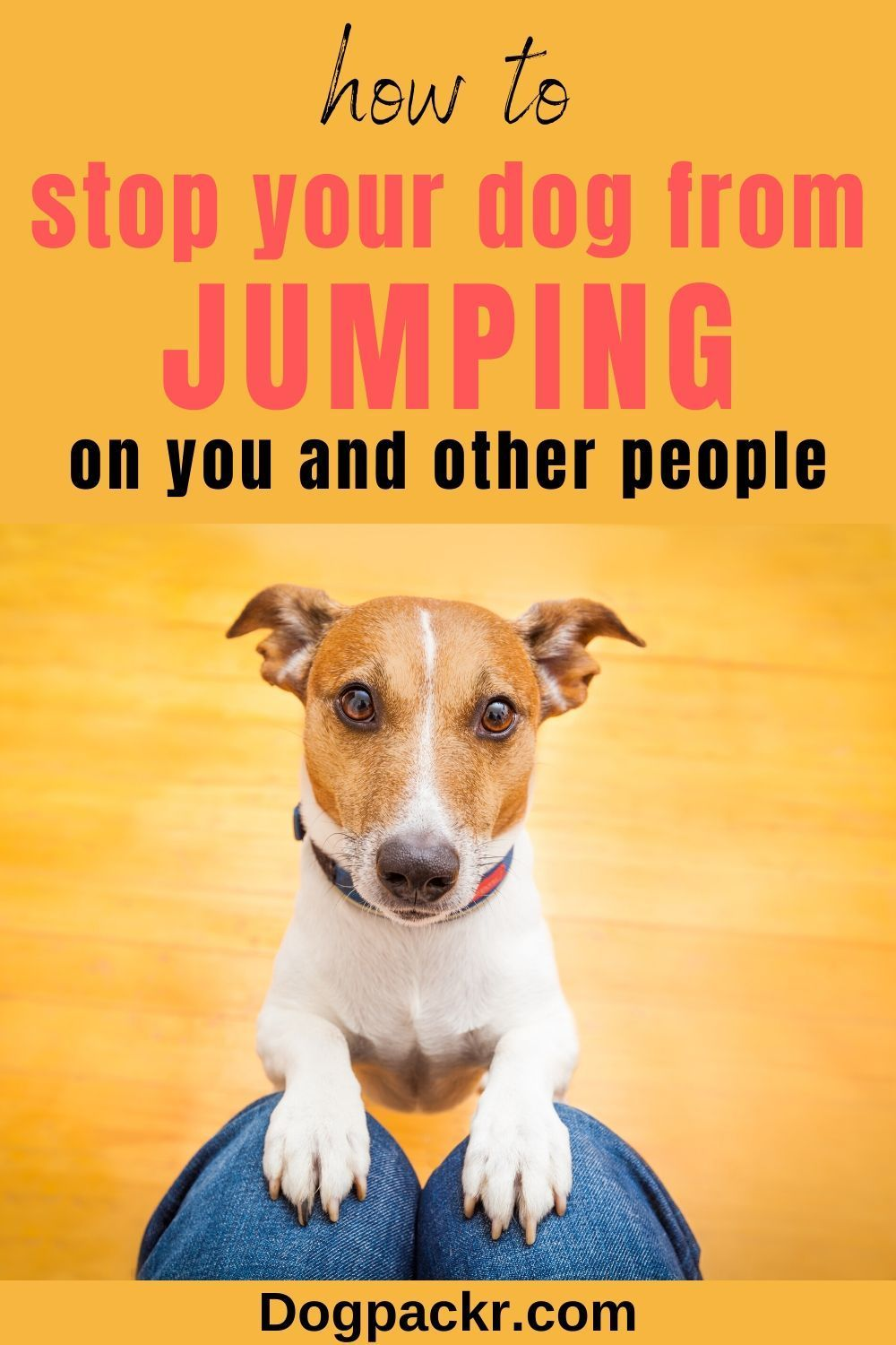 How to train a dog not to jump on you or others dogpackr