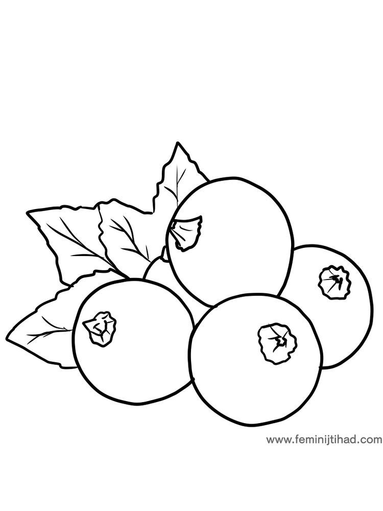 Black Currant Coloring Image Free Blackcurrants Are Shrub Plants That Have Purplish Colored Round Frui Fruit Coloring Pages Coloring Pages Free Coloring Pages