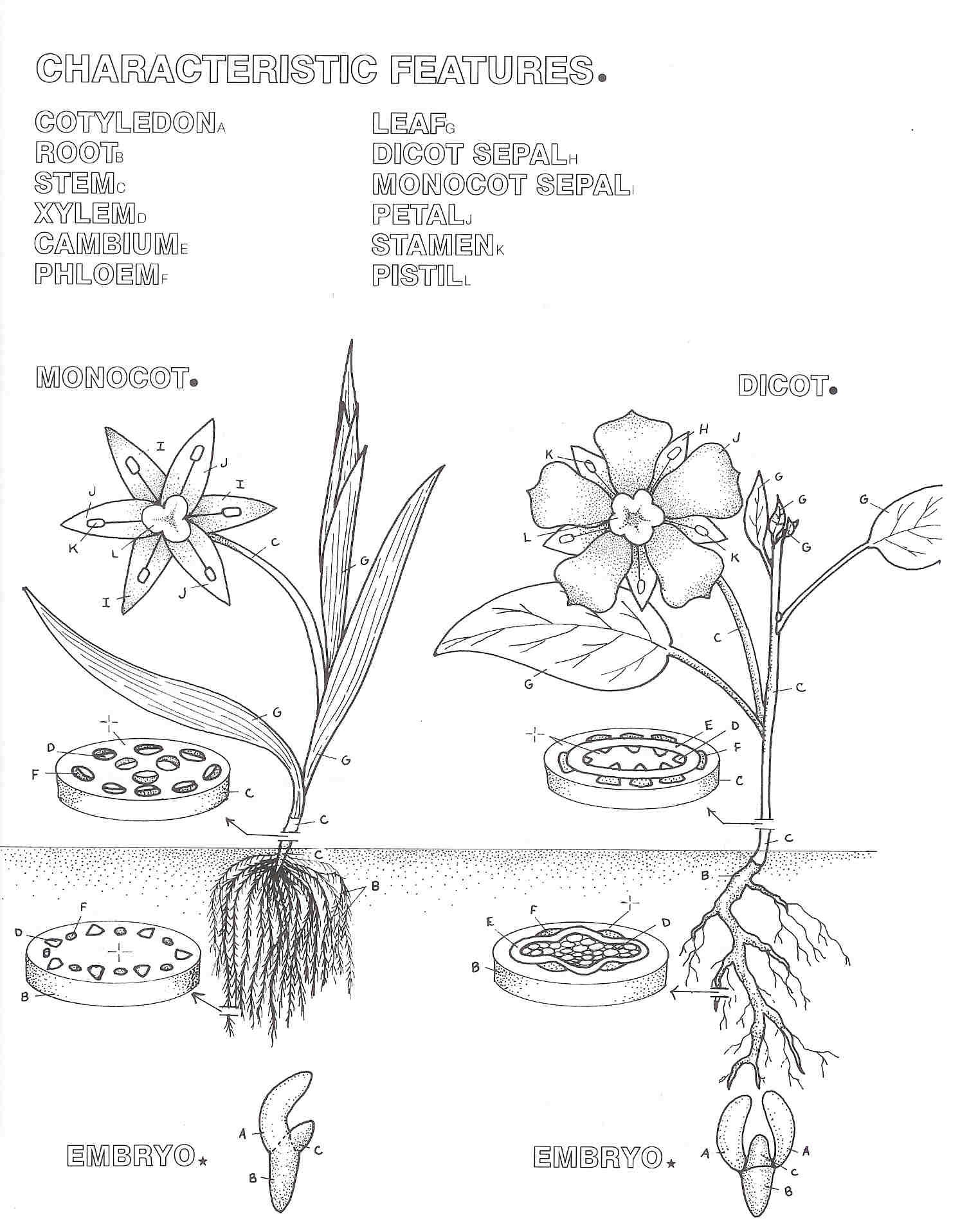 Coloring Pages Flower Coloring Pages Parts Of A Flower