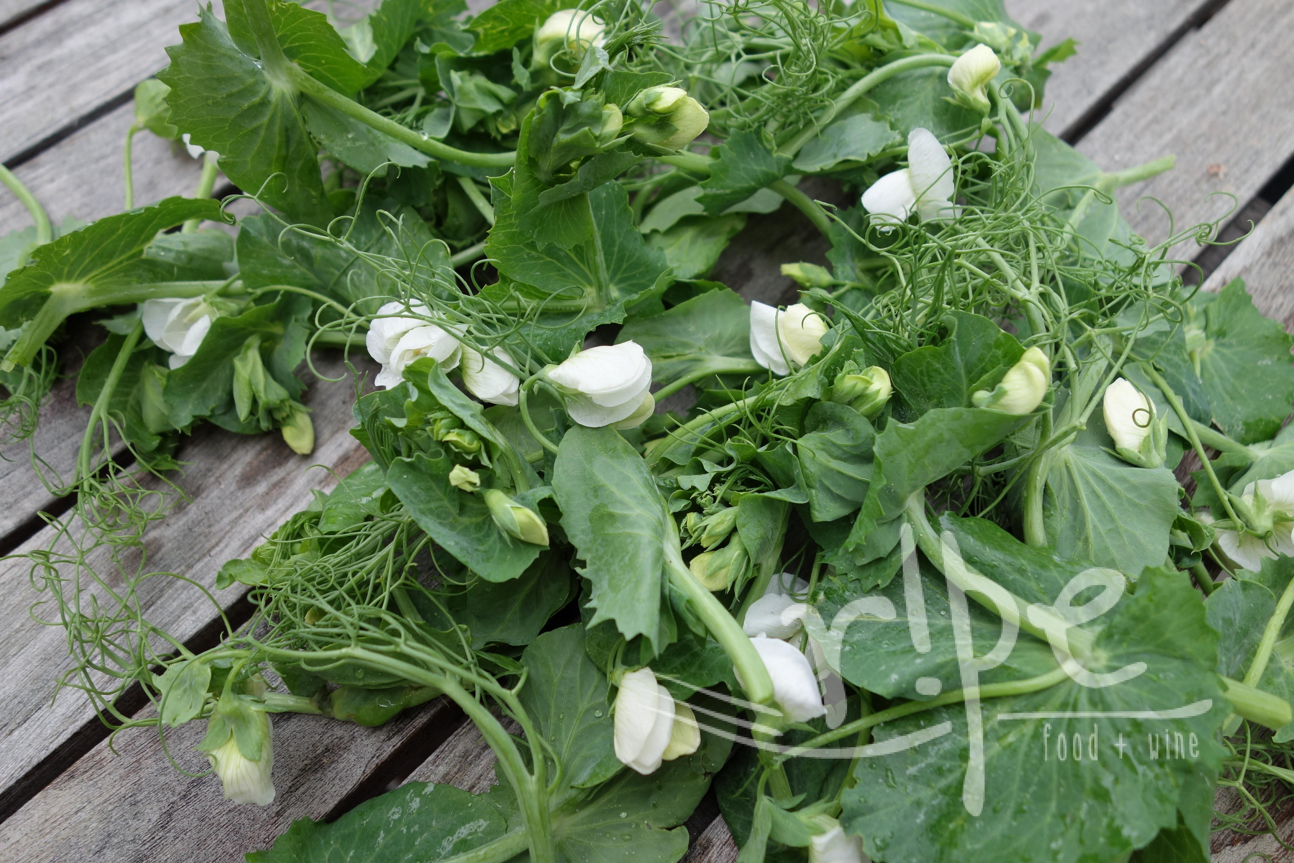 The Summer Season...Pea Shoots and What's Next?!