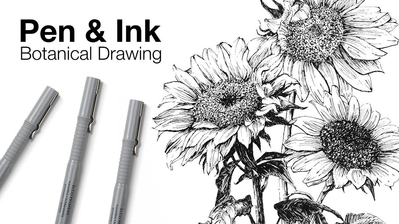 Pen and ink botanical drawing drawing tips and tricks pinterest