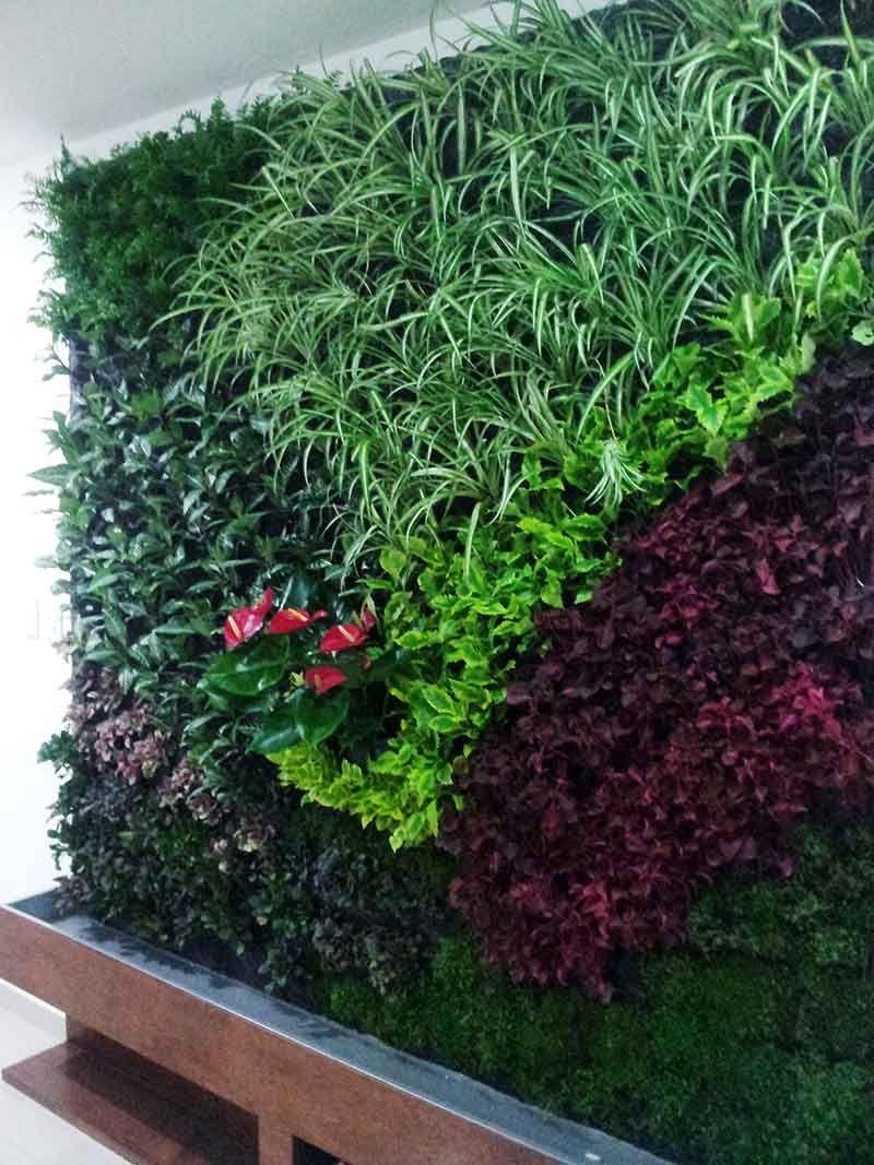 Jard n vertical realizado por un alumno de paisajismo for Que es un jardin vertical