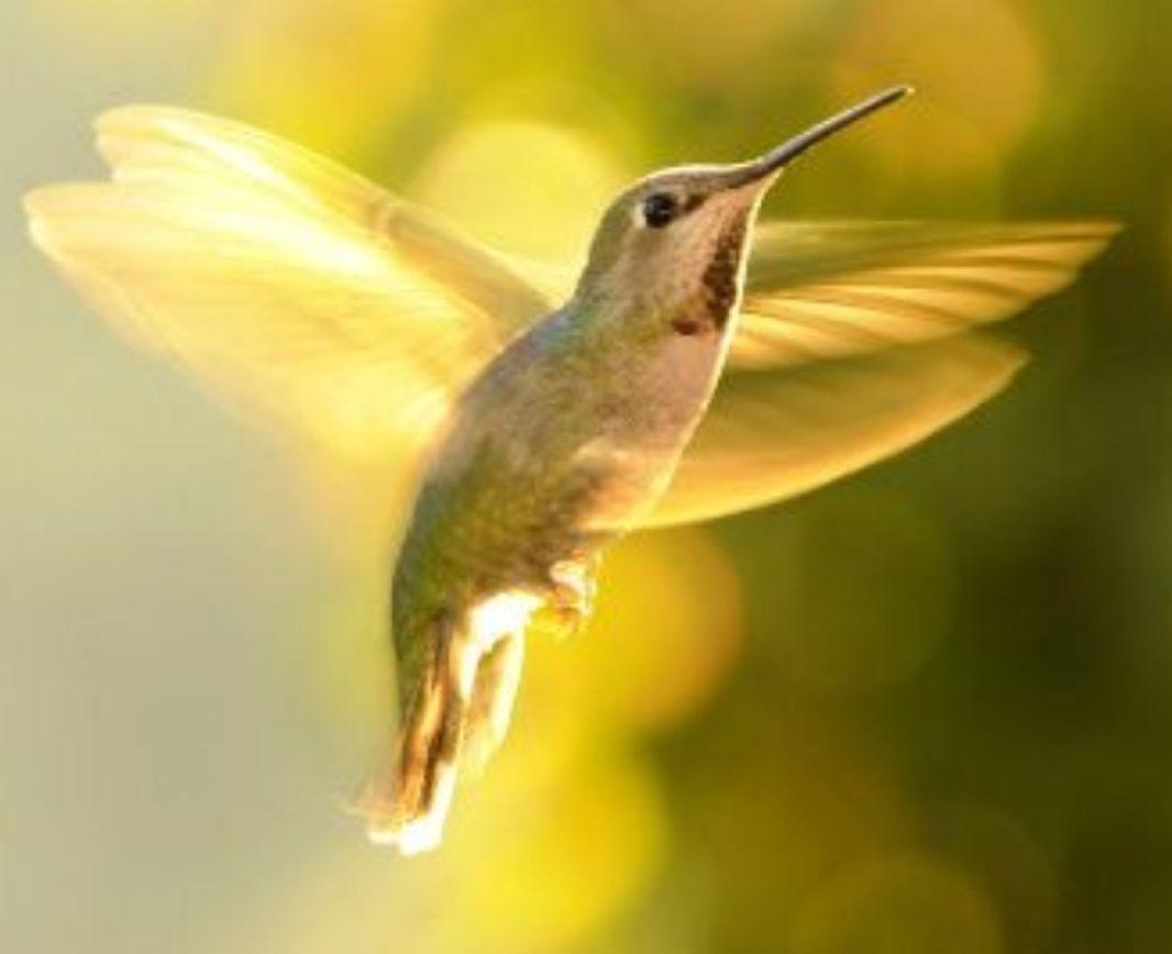 Monster High Boyfriend Scenarios Your Pet Hummingbird Beautiful Birds Pet Birds