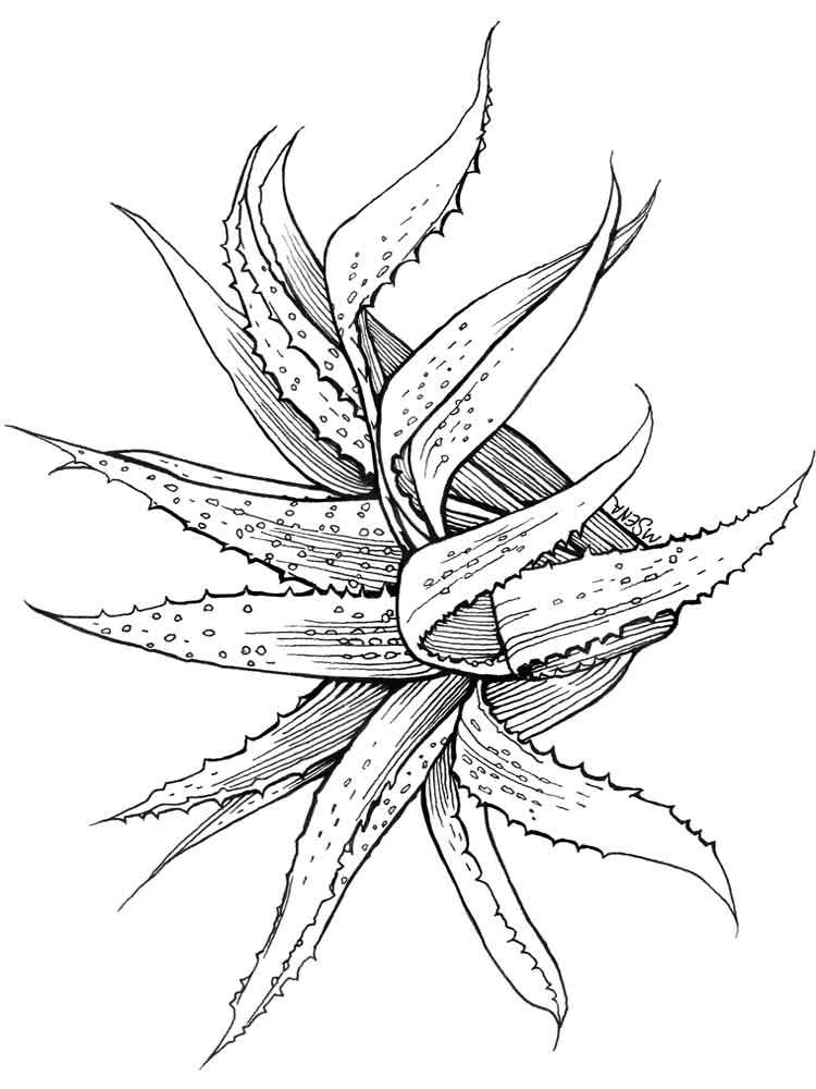 Succulent Coloring Pages ⋆ coloring.rocks! Coloring