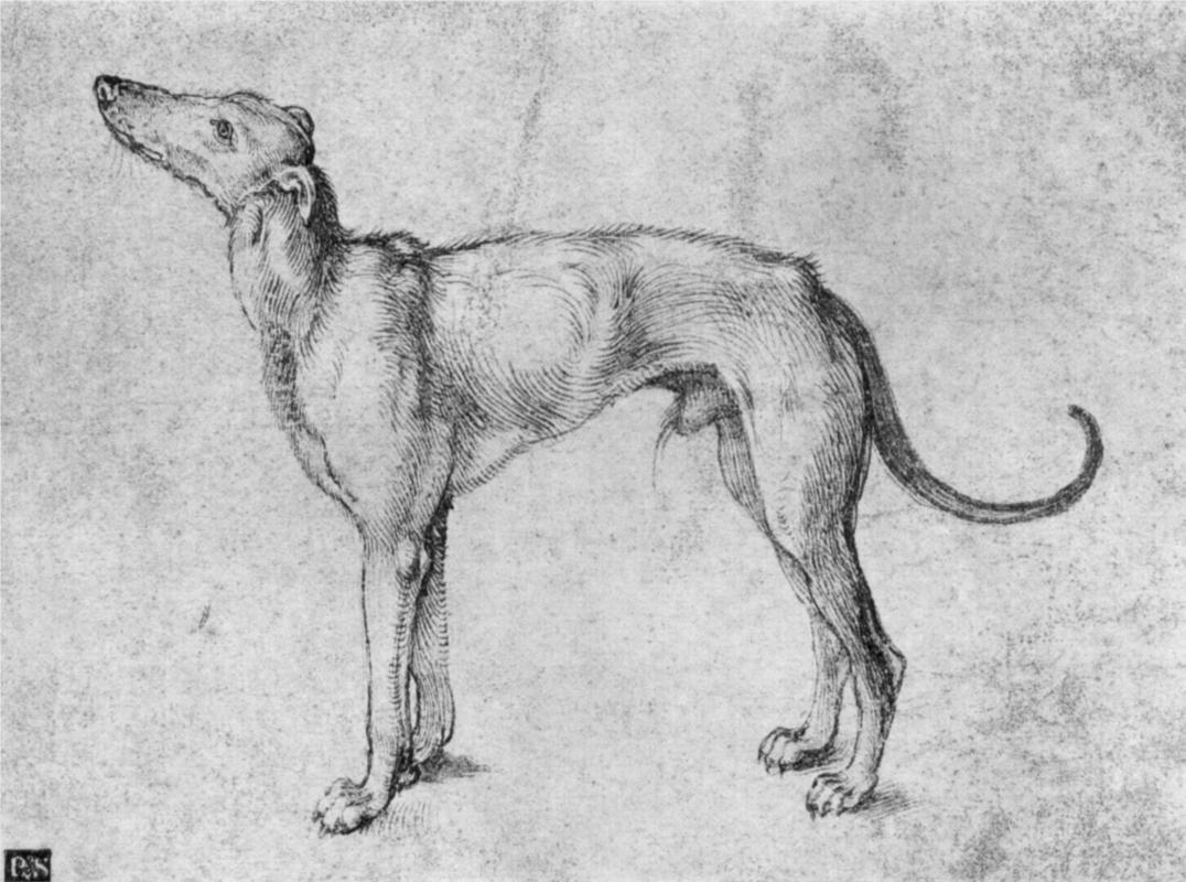 Greyhound. Durer, Albrecht.  WikiPaintings.org