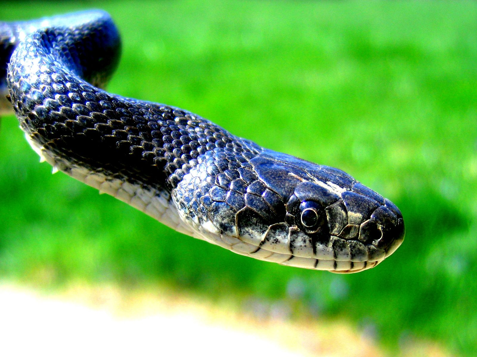Top Most Wonderful Snake Wallpapers In HD