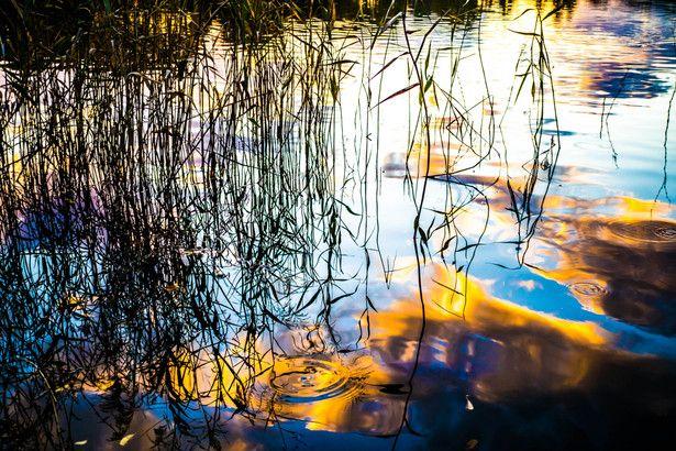 夕暮れの池 | 自然・風景 > 水辺の写真 | GANREF