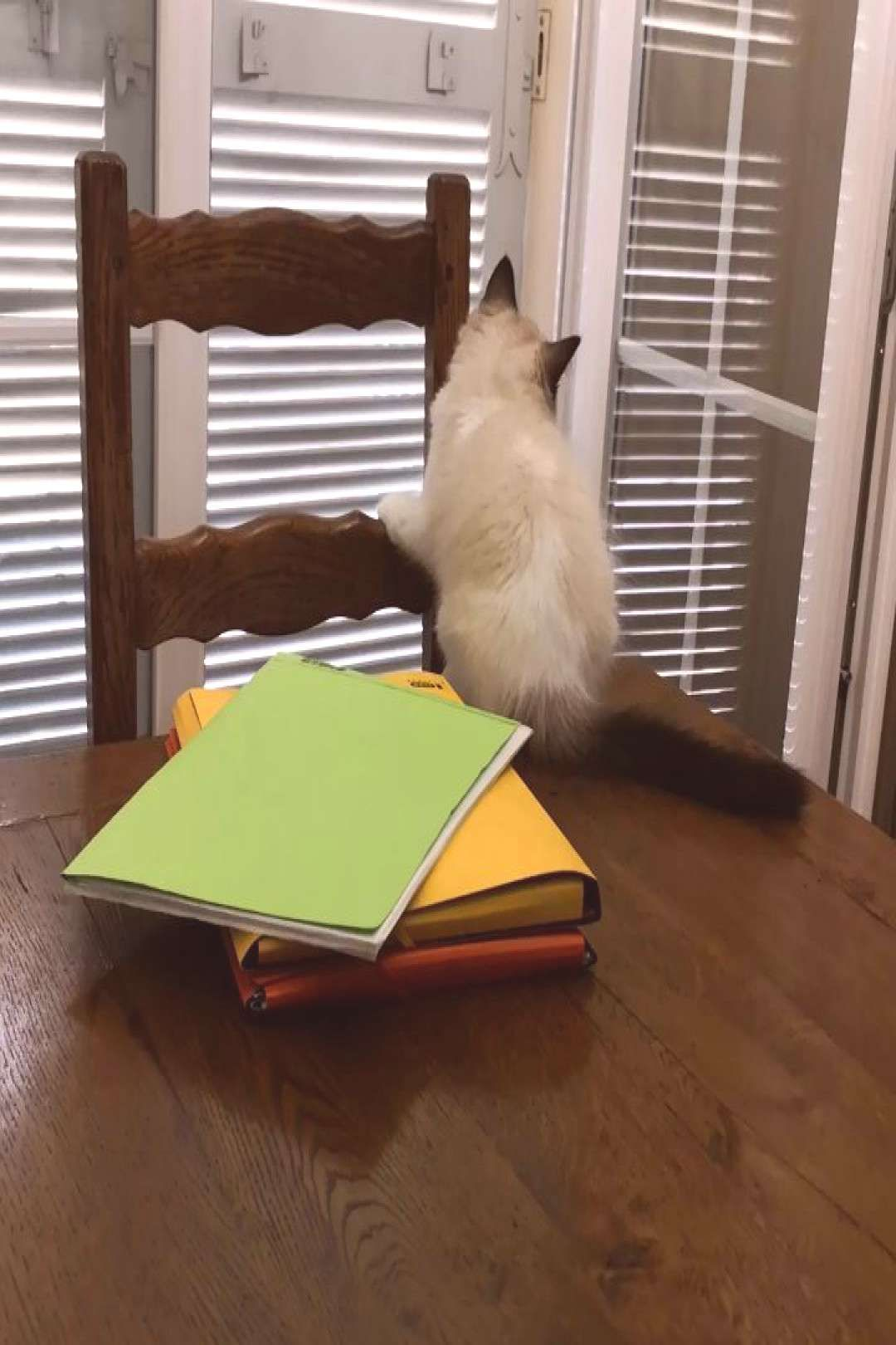 #ragdollkittens #ragdollcat #funnycat #ragdoll #instaca #clumsy #funny #boy Clumsy boy #clumsy #funny #funnycat #ragdoll #ragdollcat #instacaYou can find Ragdoll kittens and more on our website.Clumsy boy #clumsy #funny #funnycat #rag...