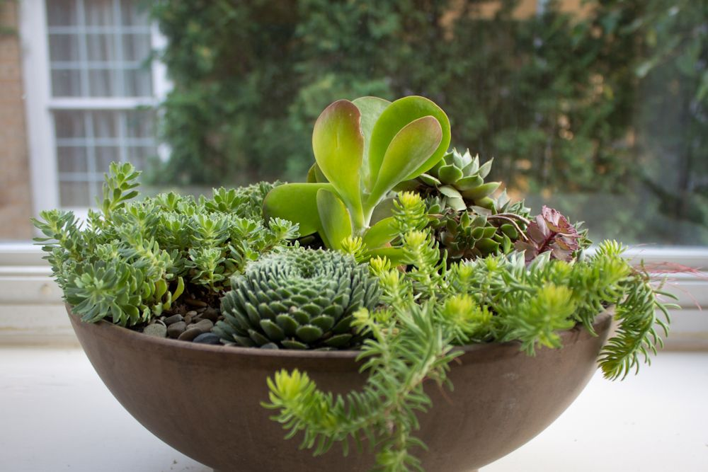 Succulent containers craftbnb - How to make a succulent container garden ...