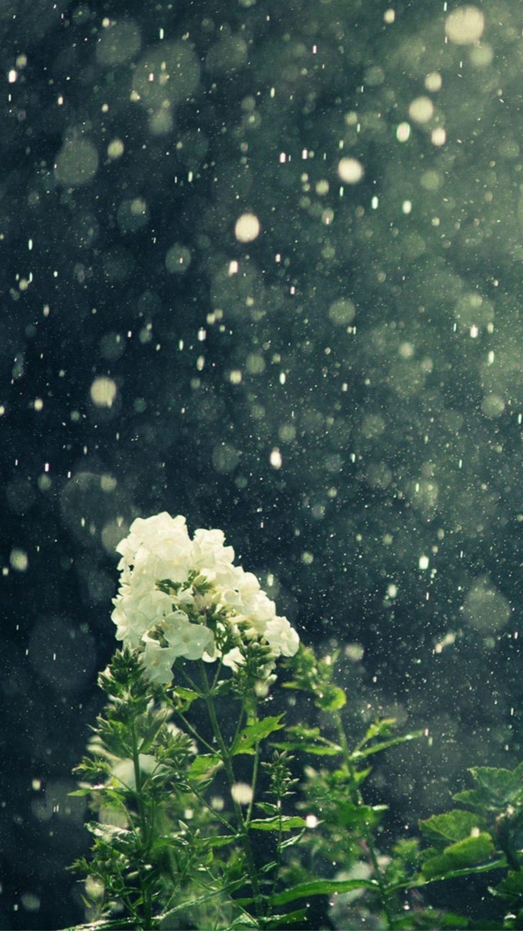 Dreamy Blowing Rain Beautiful White Flower Branch Iphone 6 Plus