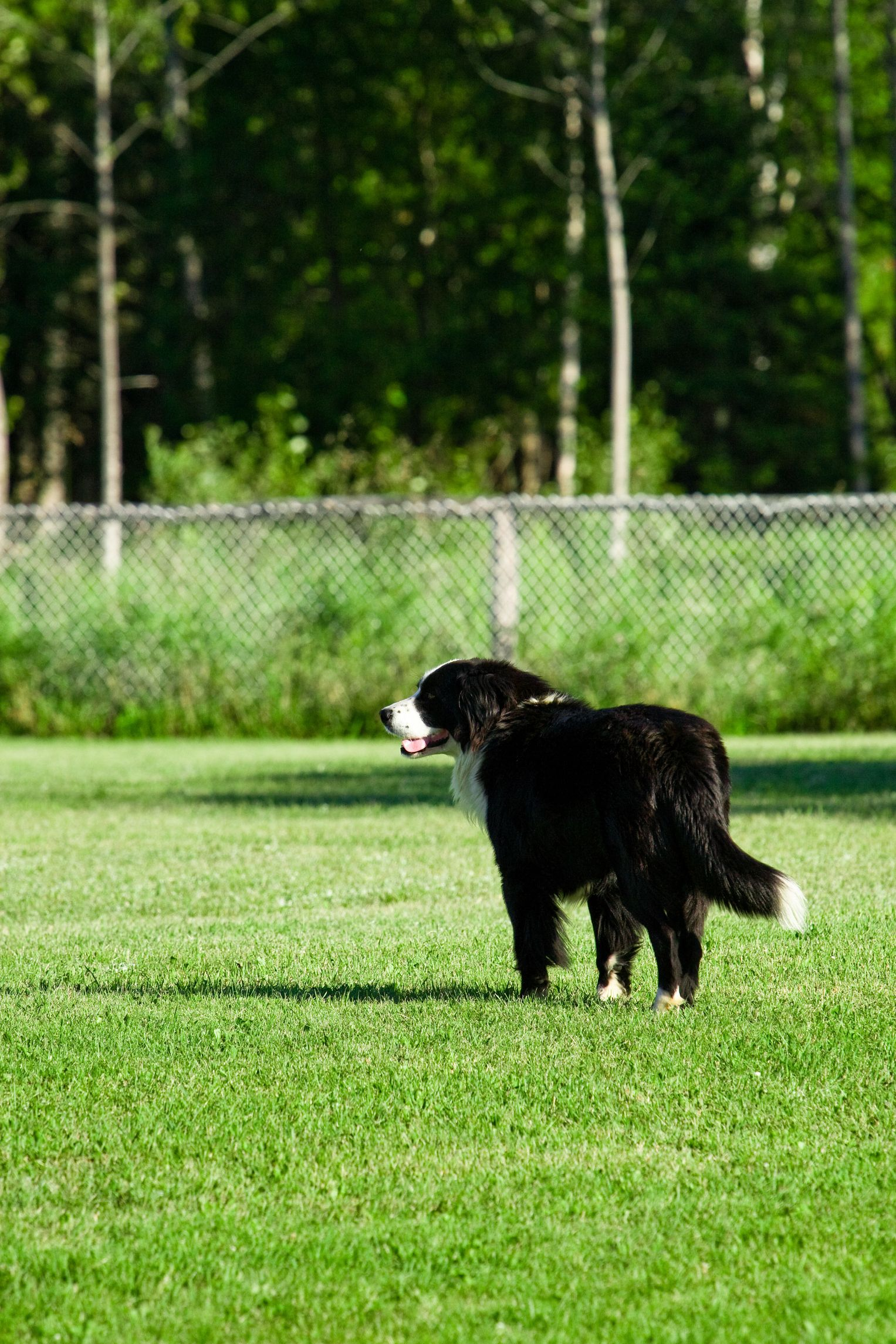 Dogs can cause serious damage to the lawn as urine and feces create dead areas and burned spots. Applying a safe, non-toxic repellent helps keeps animals at ...