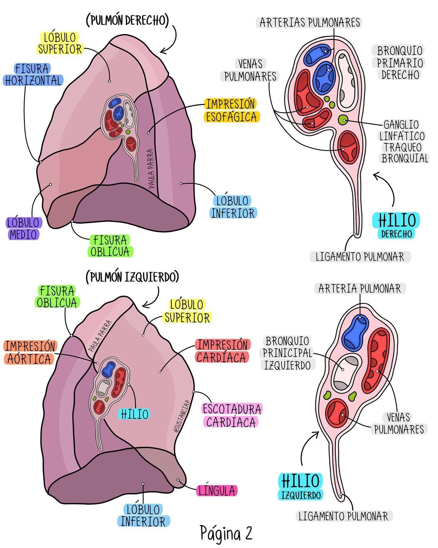 que es una fisura en los pulmones