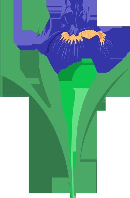 pontiac s rebellion an overview purple iris clip art and flower rh pinterest com iris clip art images iris clip art eye