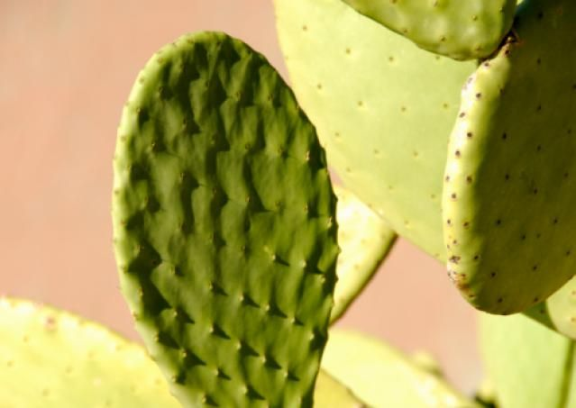 Learn About The Good And Bad Feng Shui Plants Places To Visit