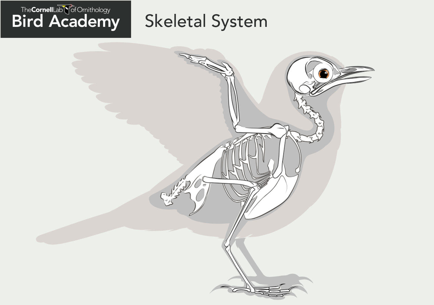 All About Bird Anatomy With Images