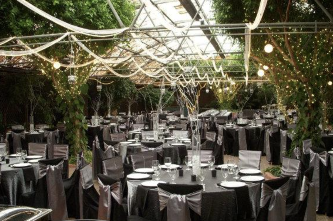 Boojum Tree S Hidden Gardens Phoenix Az Tree Wedding Ceremony Winter Wedding Planning Arizona Wedding Venues