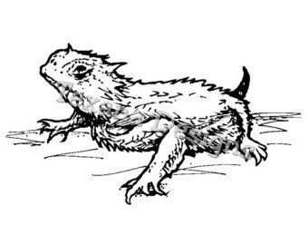 Horned Frog Coloring Pages Google Search With Images Frog
