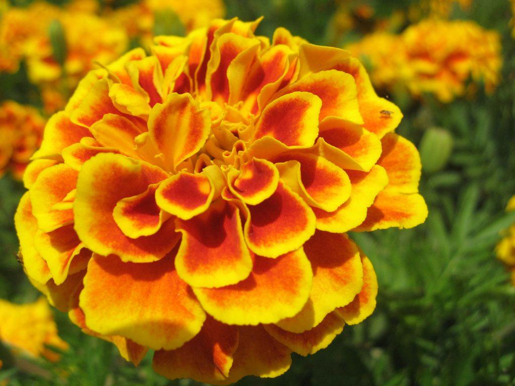 Yelloworange flower ramat hanadiv flowers orange pinterest yelloworange flower ramat hanadiv flickr photo sharing mightylinksfo