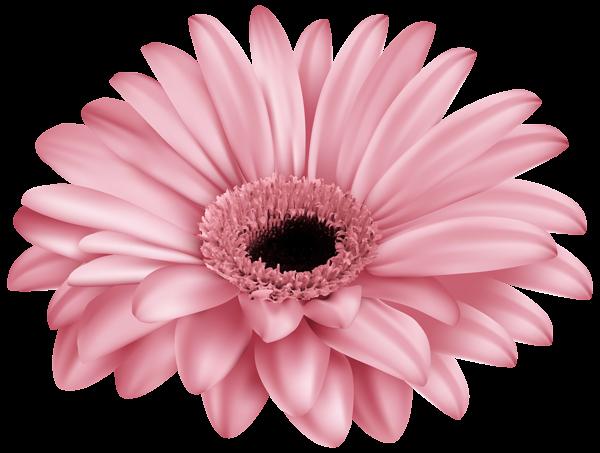 Pink Gerber Png Clip Art Image Digital Flowers Art Images Flowers