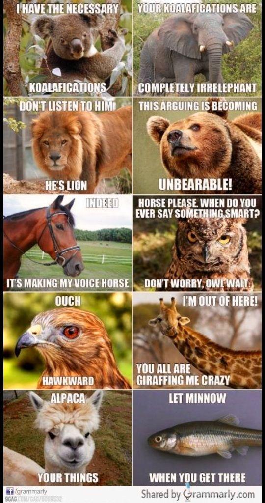 From Grammarly Com Funny Animal Jokes Animal Jokes Funny Animals