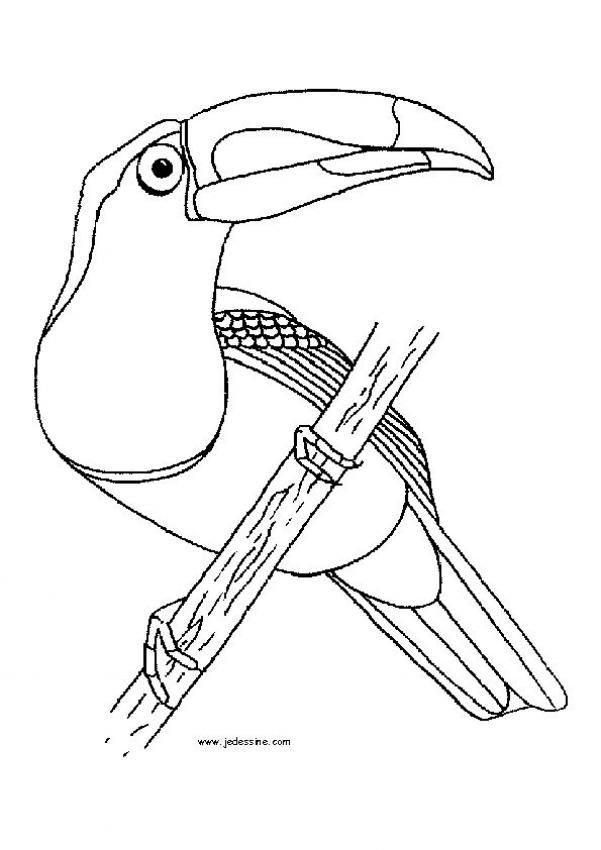 Dibujos de AVES y pjaros el colibr para imprimir  SG Parrots