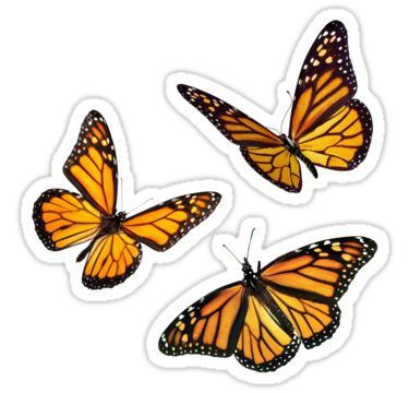 'monarch butterfly sticker pack orange' Sticker by Katie's Stickers