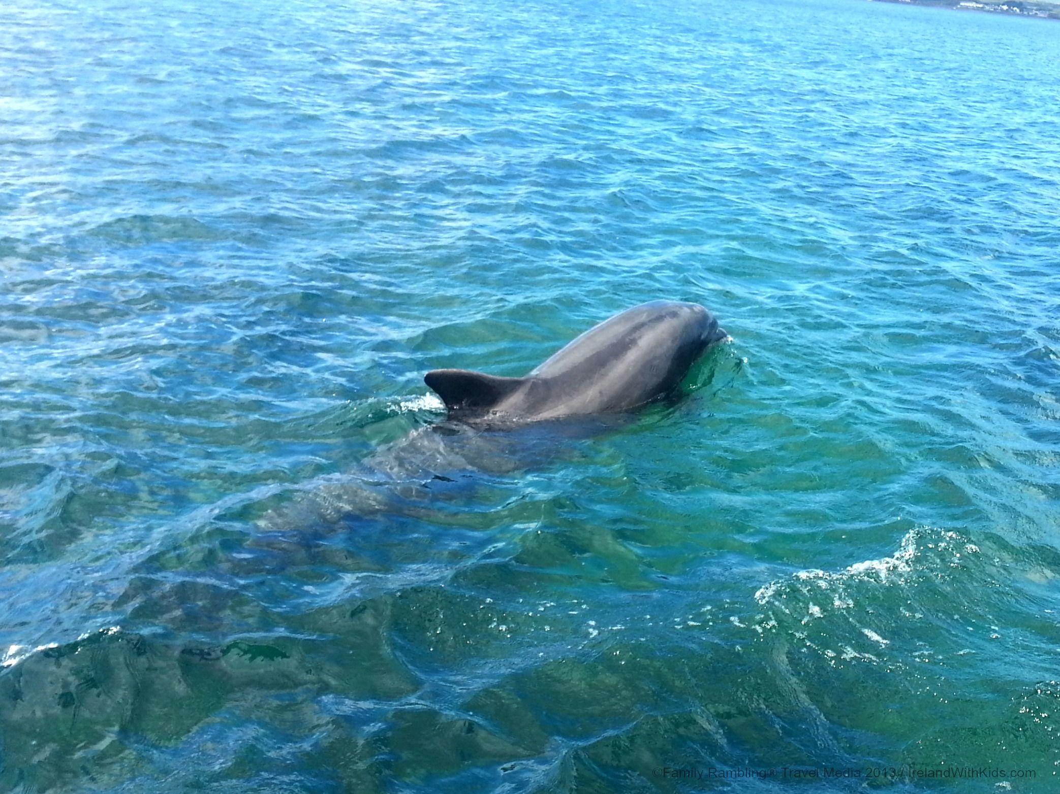 2 Fun Ways To Meet Fungi The Dingle Dolphin Ireland Family Vacations Ireland Family Vacations Dolphins Ireland
