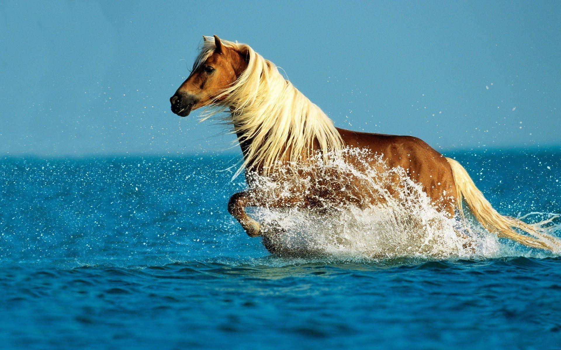 Good Wallpaper Horse Ocean - 203a9bc85eb2ffde2c740ff1628ad396  You Should Have_569142.jpg