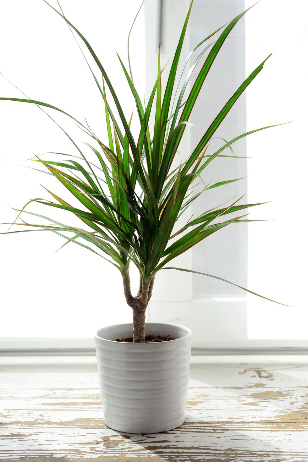 20 Humidity Loving Plants That Are Perfect For Your Bathroom Plants Tall Indoor Plants Bathroom Plants