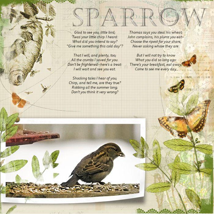 Sparrow - Digital Scrapbooking Ideas - DesignerDigitals #scrapbook #sparrow #butterfly #bees #nature #birdseed