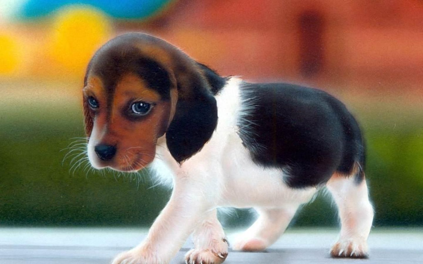 White Brown And Black Dog Cute Animal Pictures Cute Animals