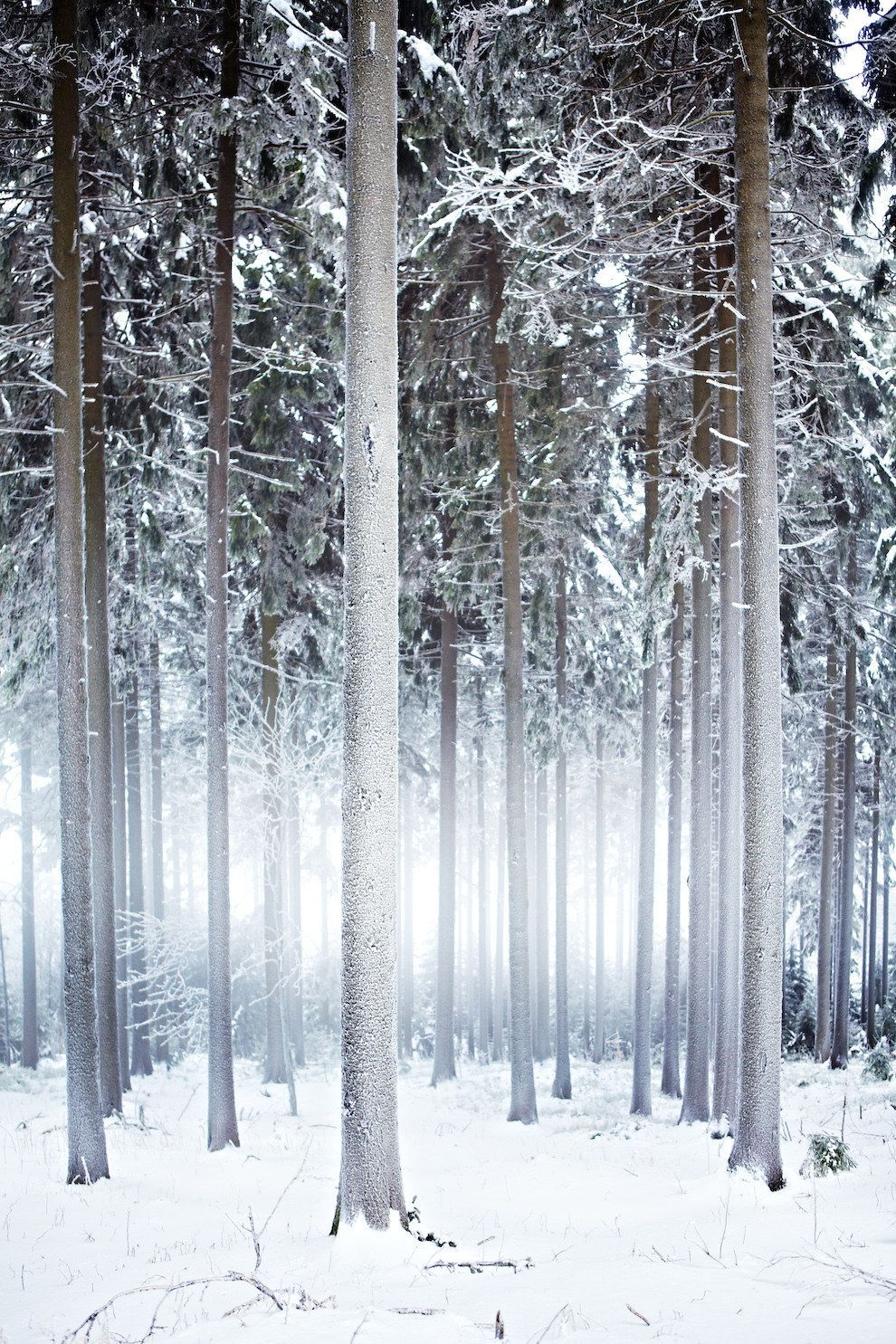 Thuringian Forest (Alemania)
