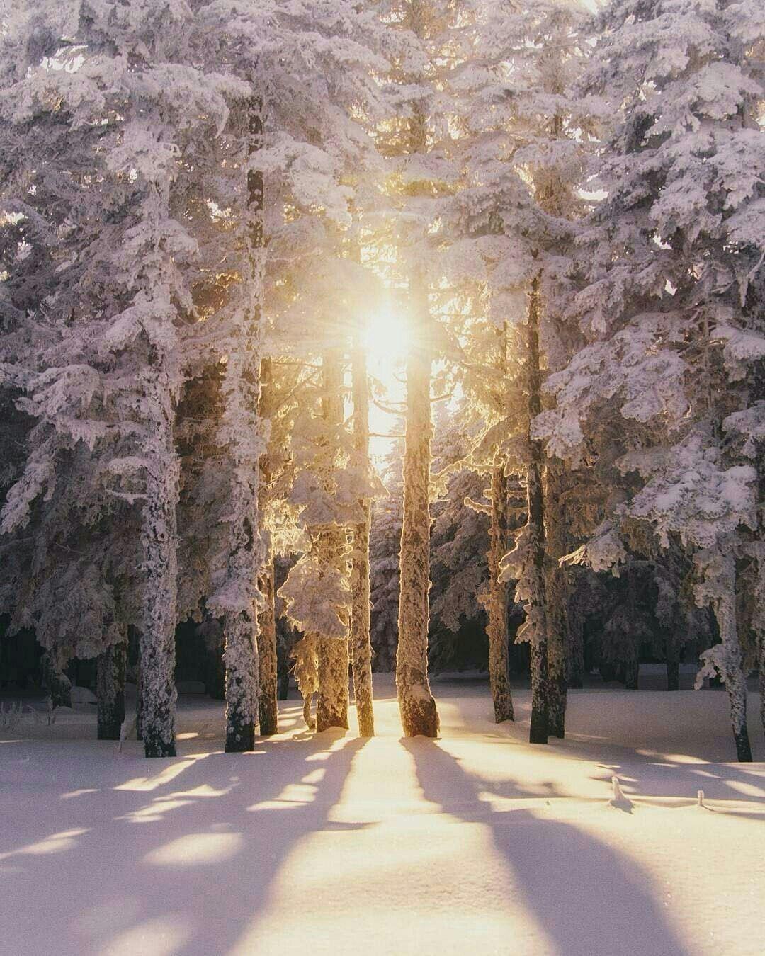 Pin von Larissa Schwezow auf WOW! | Winter ...