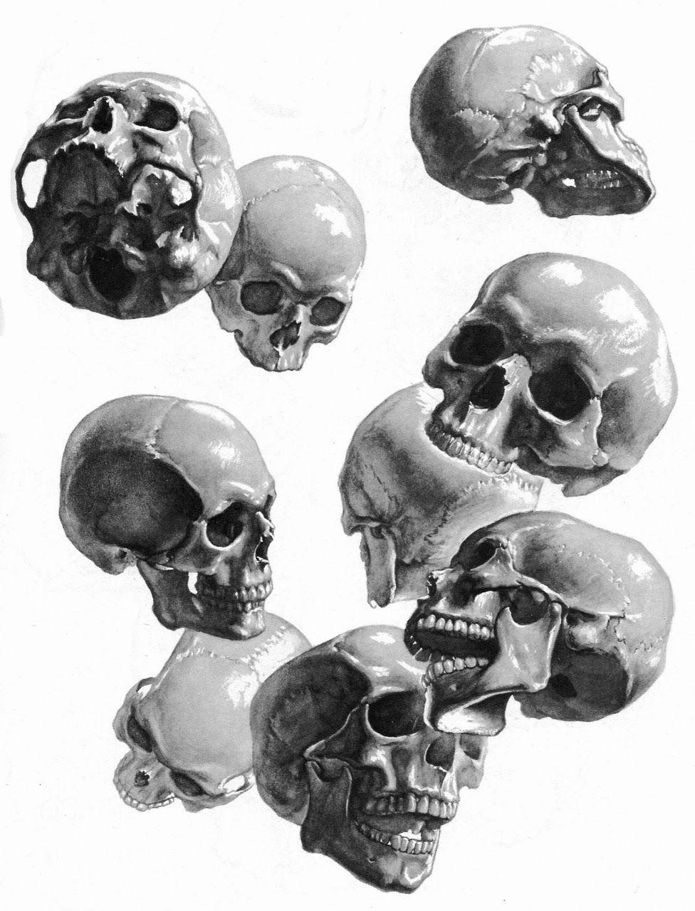 Stephen Rogers Peck ~ Atlas of Human Anatomy for the Artist [skulls ...