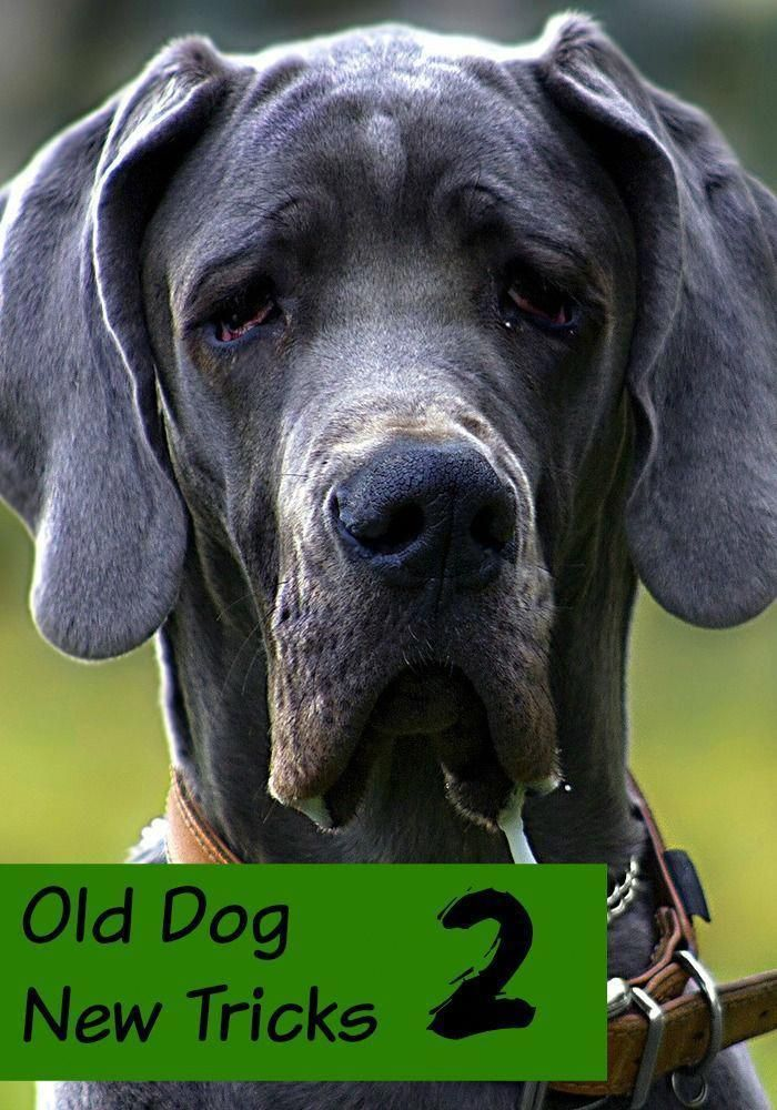 Old Dog New Tricks 2 You Can Teach An Old Dog New Tricks Check