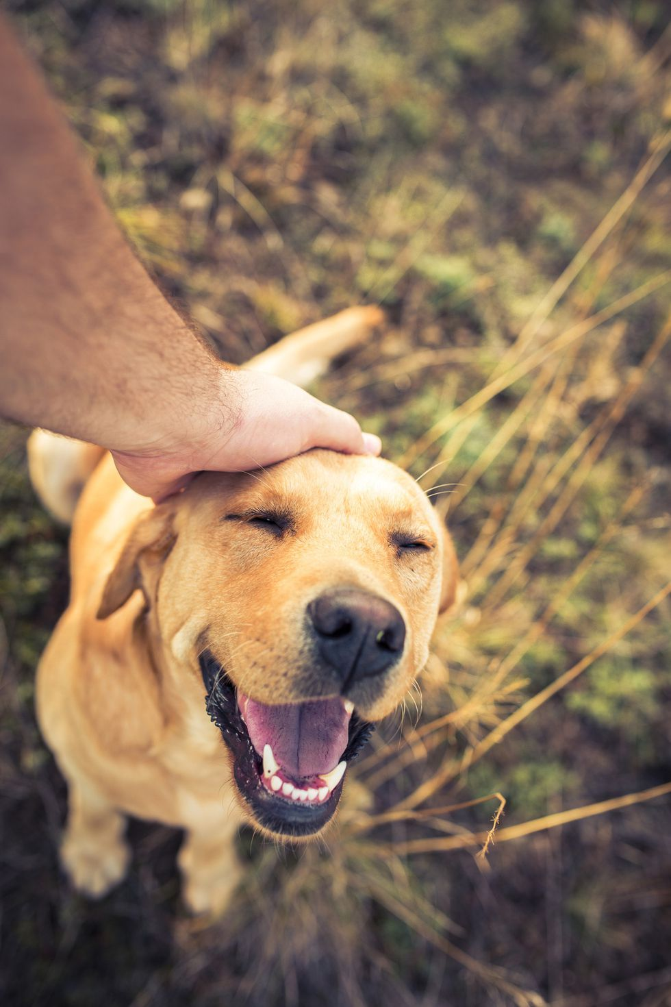 Boy Dog Names That'll Make You Want to Adopt a New Best