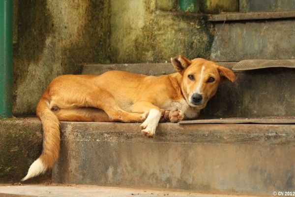 Thousands Of India S Stray Dogs Are At Risk Of Losing The One
