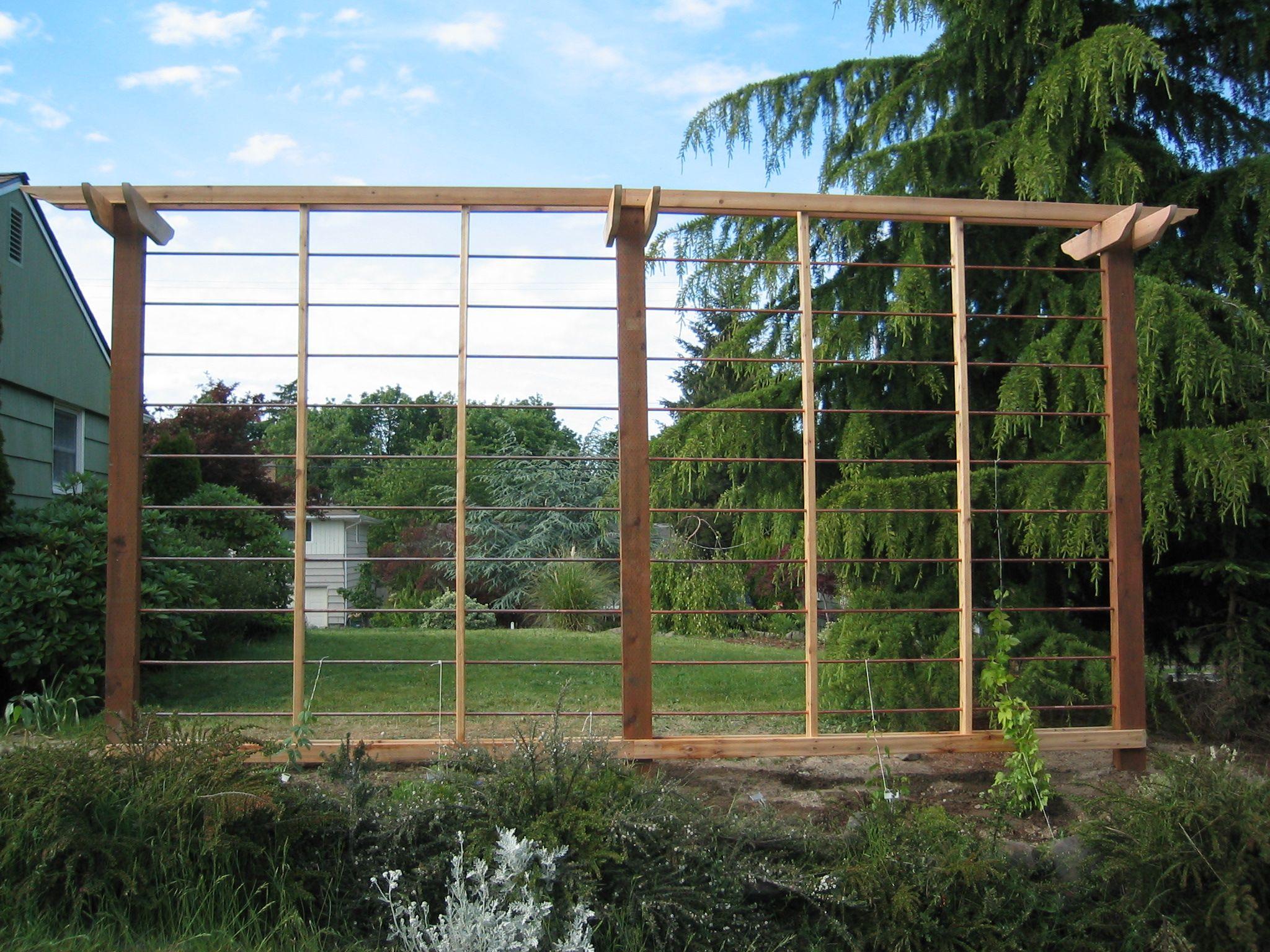 Superb Hop Trellis Ideas Part - 5: Garden Ideas · Hops Trellis