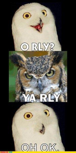 OWLRYLY Owl, Horned owl, Great horned owl