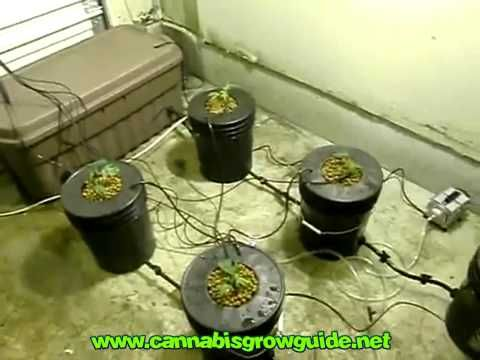 Grow Using DWC (Deep Water Culture) Mother Plants \ Set Up