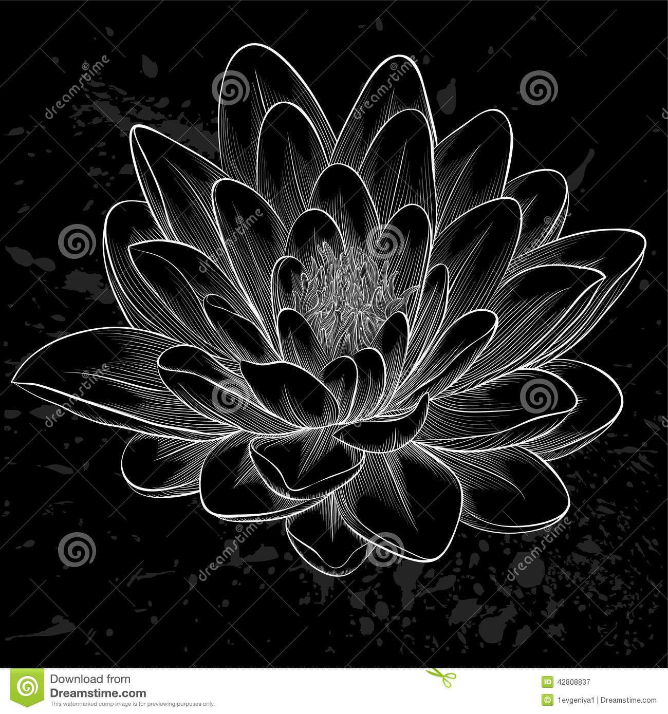 Lotus Flower Clipart Black White Google Search Campuusboston