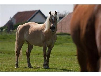 Gestolen pony teruggevonden in park Rosenburgh - dichtbij.nl  WIE O WIE HEEFT WST GEZIEN???