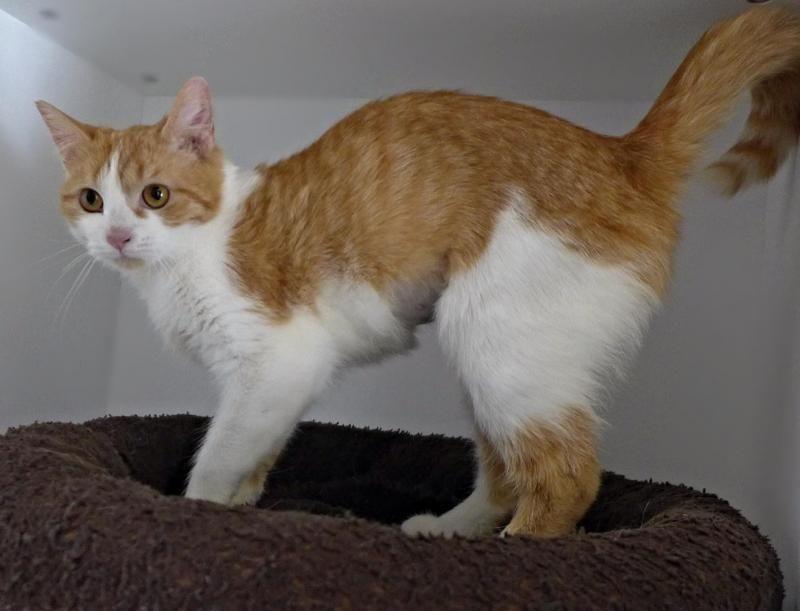 Adopt C62984 Hannah (Mount Laurel Animal Hosp.) on (With