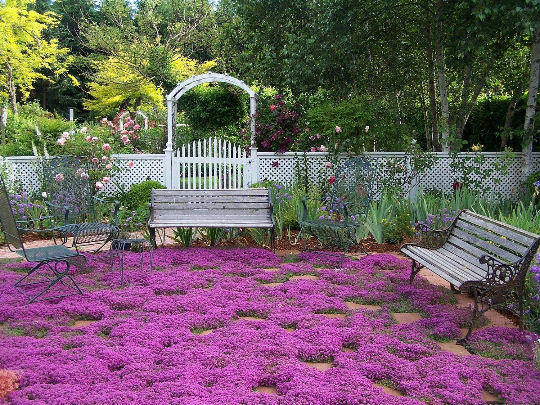 Bulk 1200 creeping thyme seeds ground cover fragrant