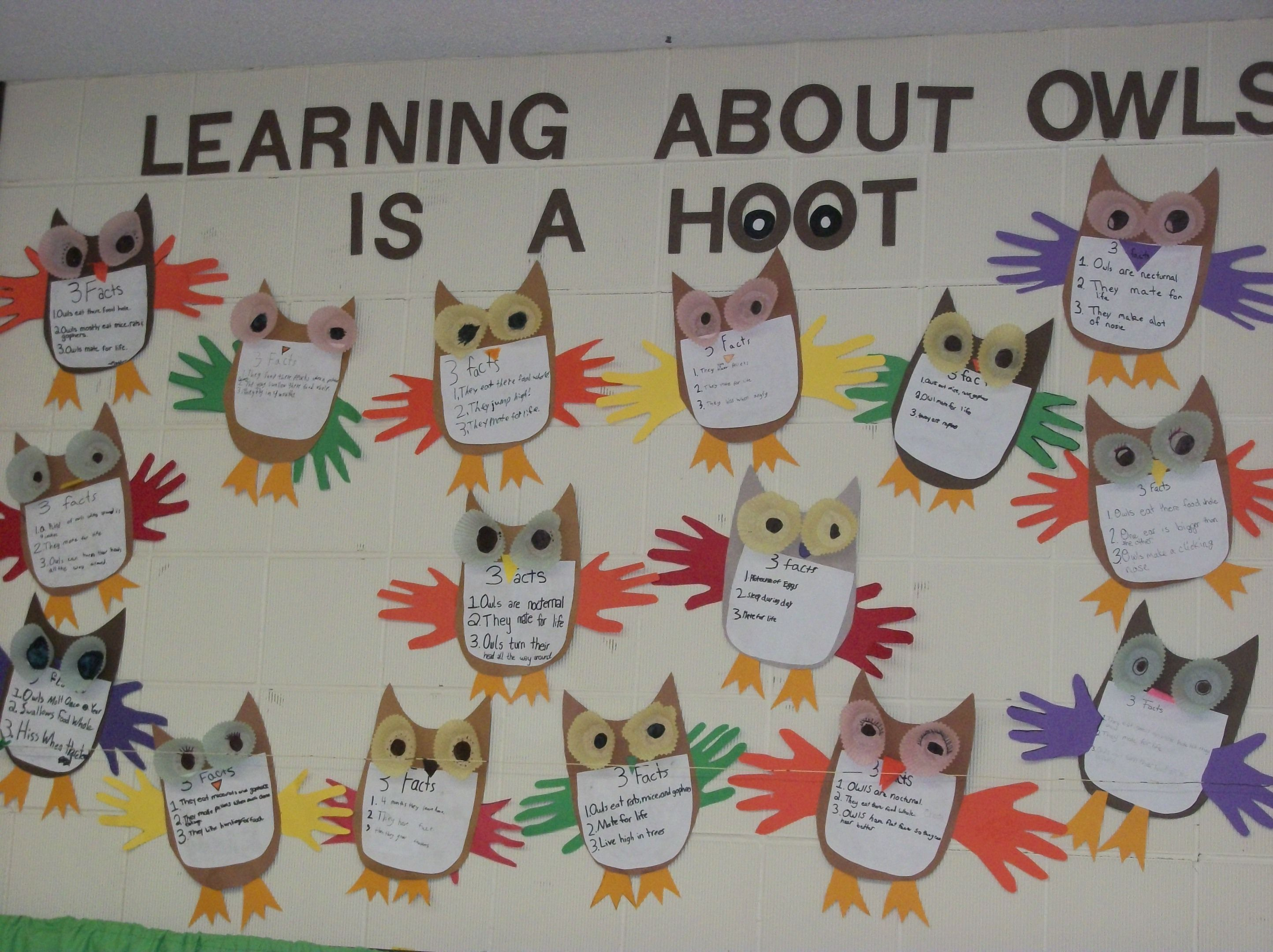Another Owl Unit Fact Board It Was A Hoot