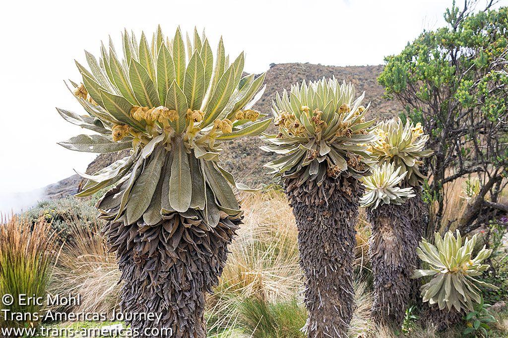 19++ Sun goddess cactus height inspirations