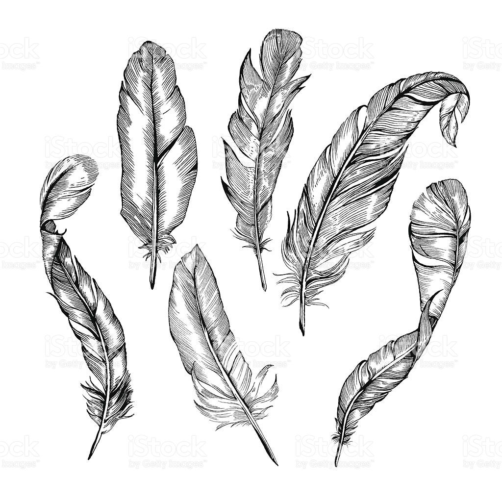vector detailed hand drawn illustrations of feathers in. Black Bedroom Furniture Sets. Home Design Ideas