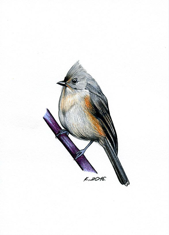 Tufted Titmouse Bird Original Drawing Art Watercolor Pencils