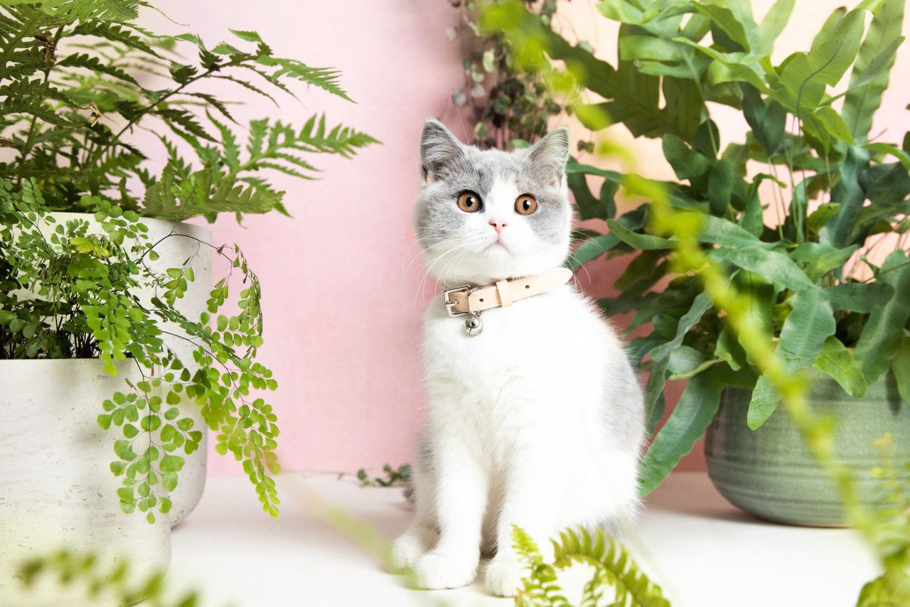 How And When To Let Your Kitten Outside For The First Time Breakaway Cat Collars Cat Collars Cat Lover Gifts Funny