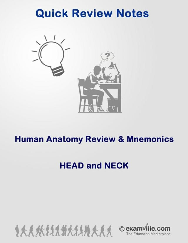 Anatomy Review and Mnemonics - Head and Neck | Pinterest | Ap ...